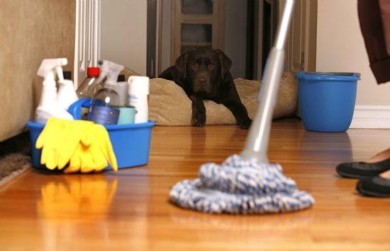 Kınık Temizlik Şirketi 0232 346 41 07 Pırlantalar Temizlik Şirketi Temizlik Hizmetleri İzmir