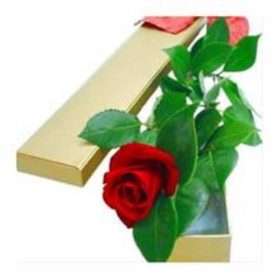 Samsun Çiçekçi Samsun Çiçekçileri Samsun Çiçek Siparişi