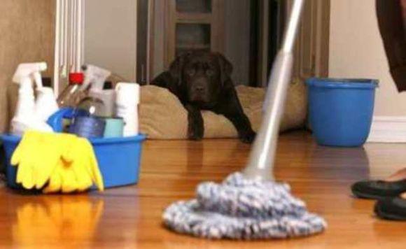 Koşuyolu  Temizlik Şirketleri İnşaat Sonrası, Ev, Daire, Cam, Ofis, Okul Temizliği Tutku Temizlik  Koşuyolu
